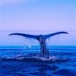 고래 새우
