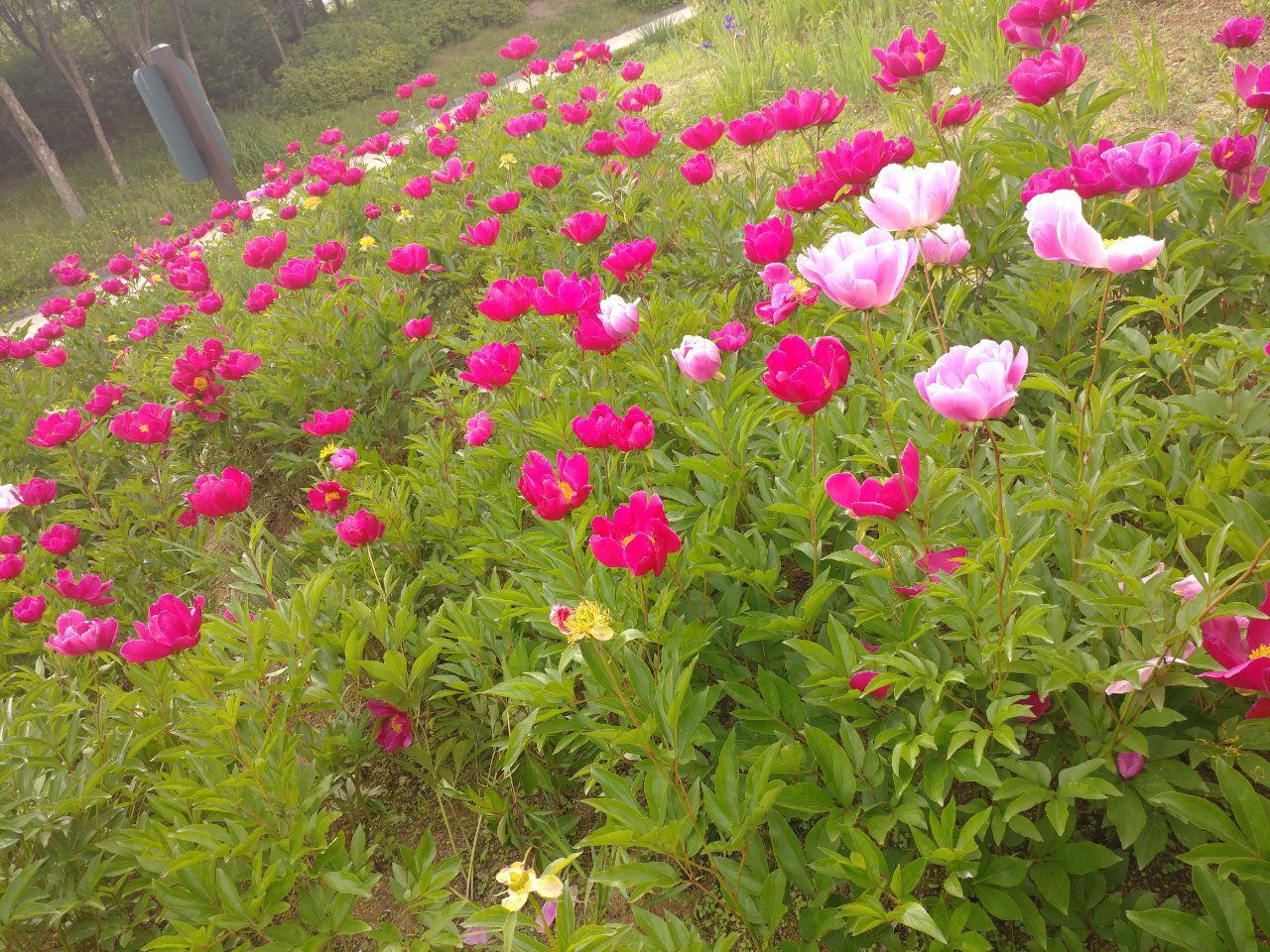 photo_2018-05-27_12-48-45.jpg