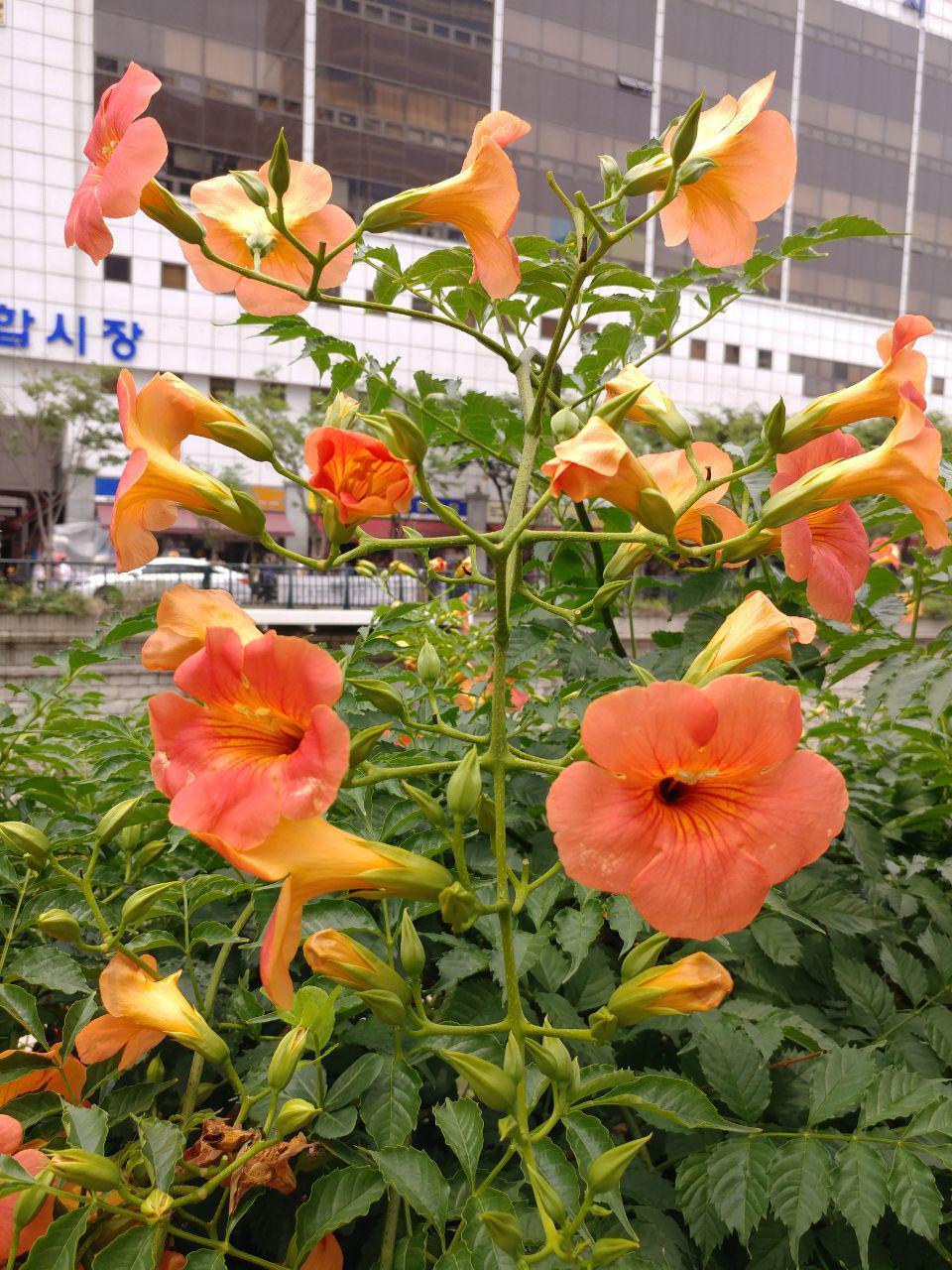 photo_2018-06-30_16-35-02.jpg