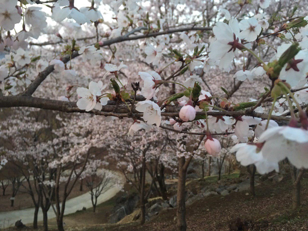 photo_2019-04-19_15-49-41.jpg