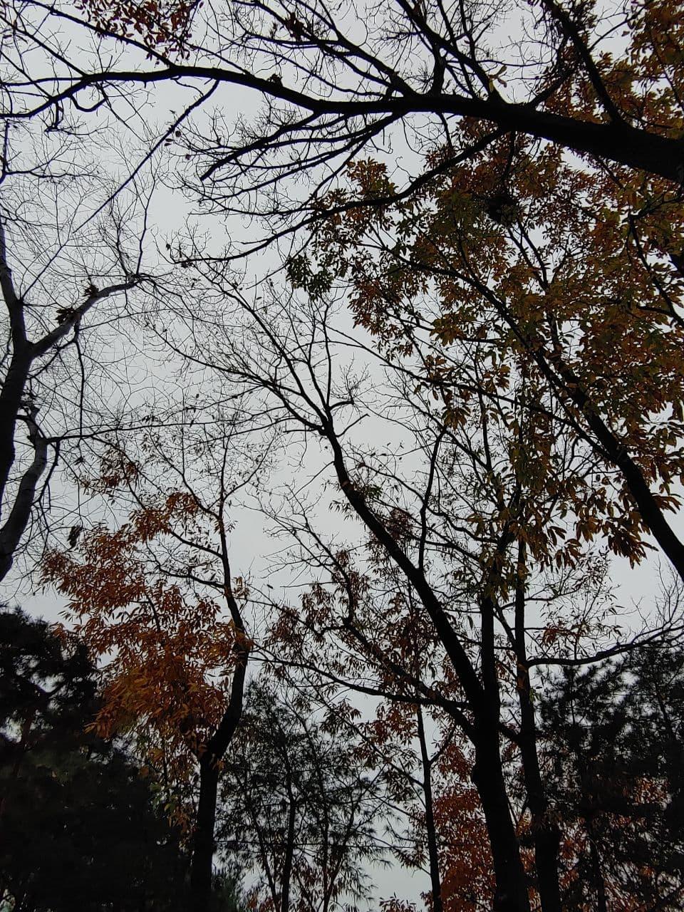 photo_2020-11-19_22-50-50.jpg