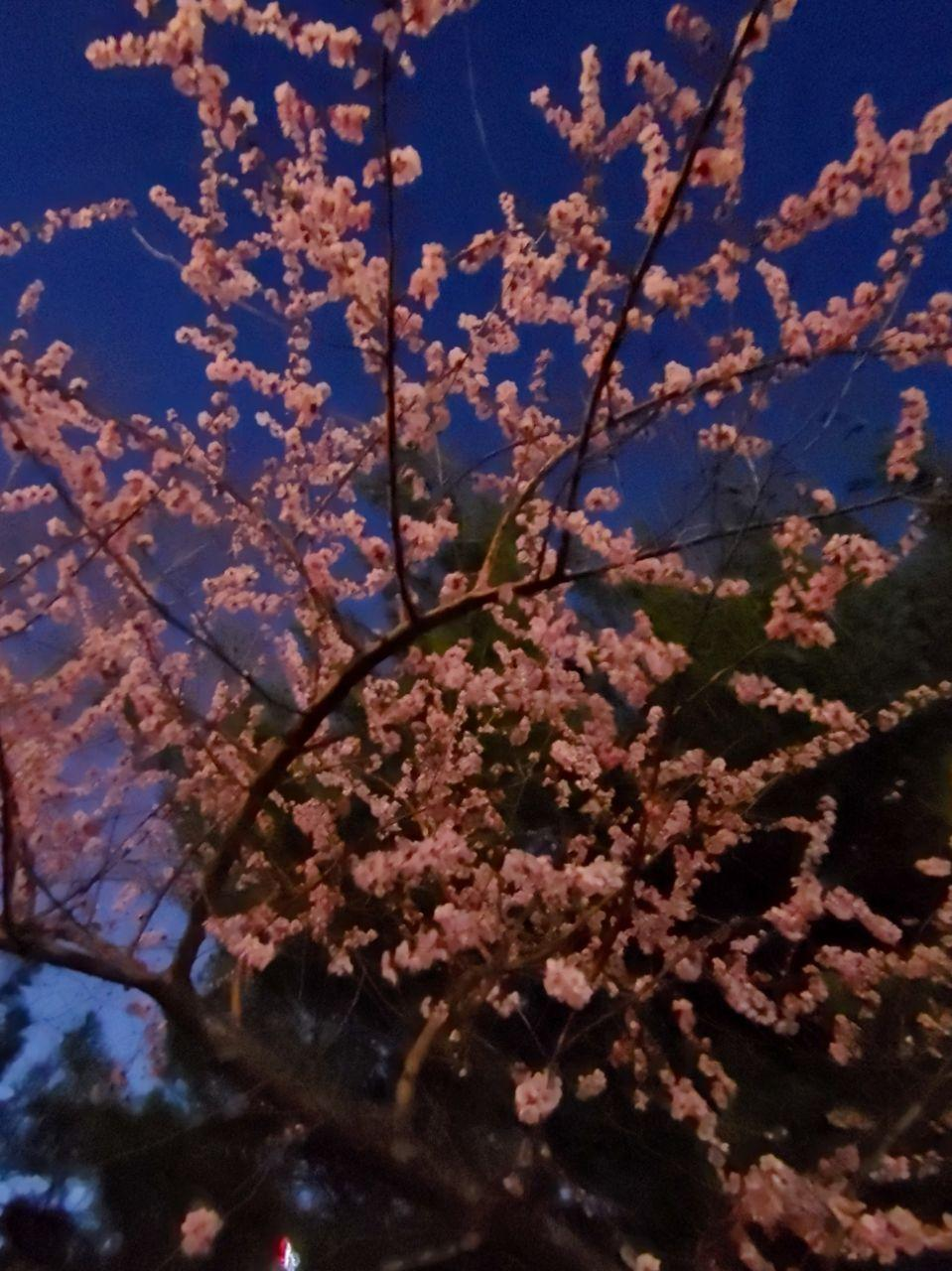 photo_2020-03-22_22-09-18.jpg