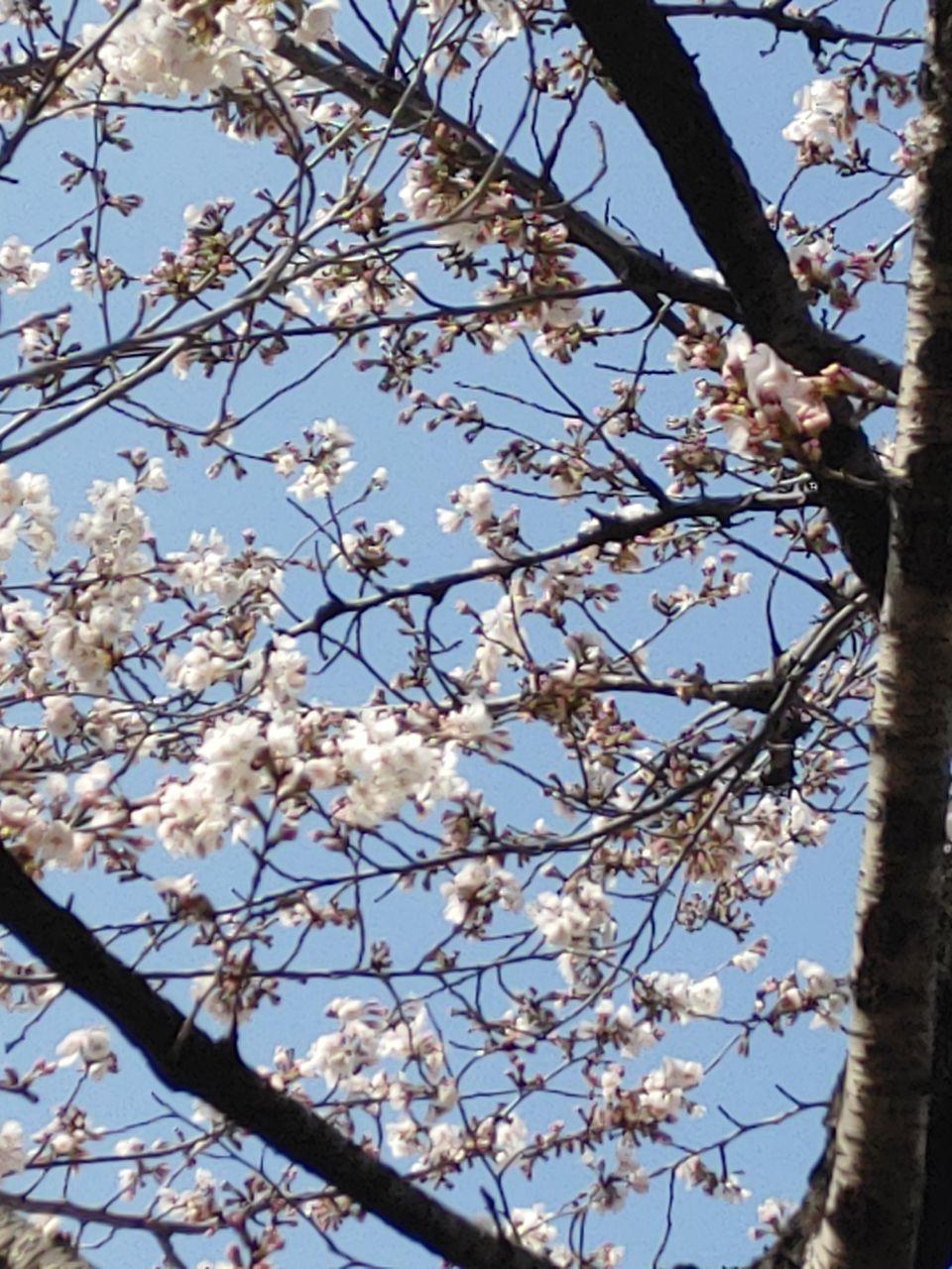 photo_2020-03-27_21-45-19.jpg