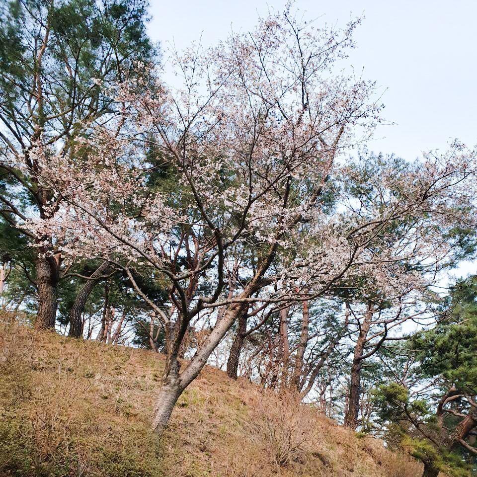 200402_꽃-1.jpg