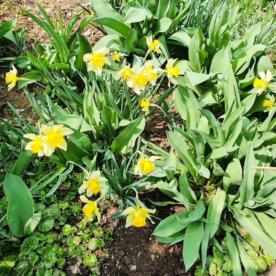 200402_꽃-2.jpg